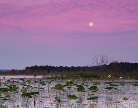 Harvest Moonrise