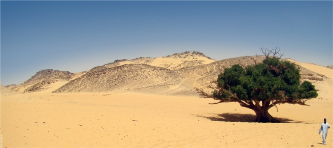A_man__a_tree_and_the_desert_by_e_antoine